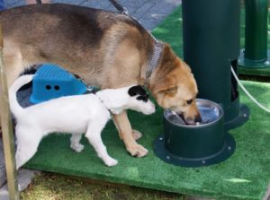 drinking-fountains-for-dogs